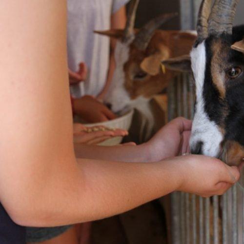 Echter Bauernhofurlaub im Villnößtal (10)