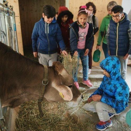 Echter Bauernhofurlaub im Villnößtal (3)
