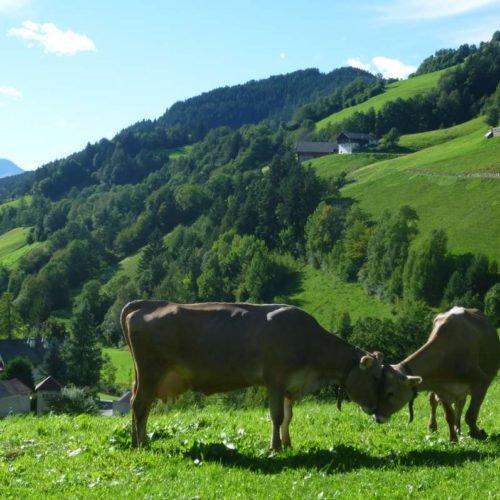 proderhof-villnoess-suedtirol (39)